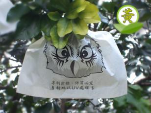 **限量**  麻豆大白柚 10 斤裝